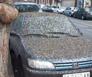 Bird Crap on a Car