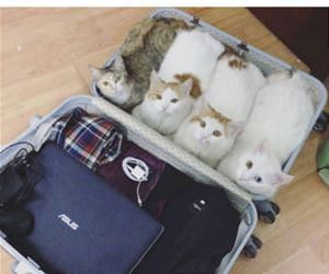 always pack essentials funny picture