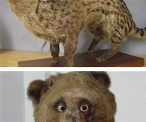 amazing taxidermy funny picture