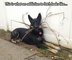 an addiction to fetch funny picture