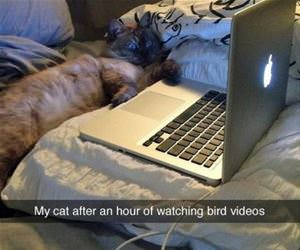 an hour of watching bird videos funny picture