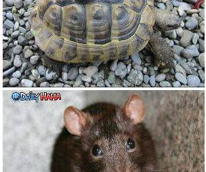 Animal Compilation Funny Picture