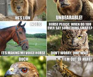 Image of: Punny Animal Puns Funny Picture Bad Mailman Puns
