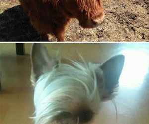 animals having killer hair day funny picture