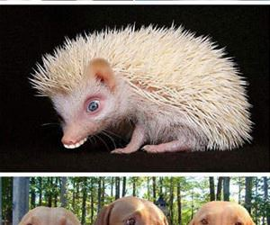 animals with human mouths funny picture