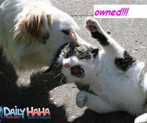 Dog Owning cat Picture
