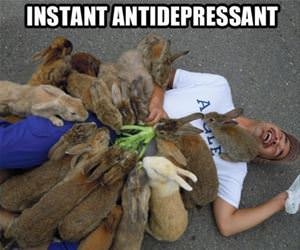 antidepressant funny picture