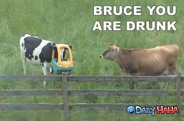 Drunken Cow Are-you-drunk