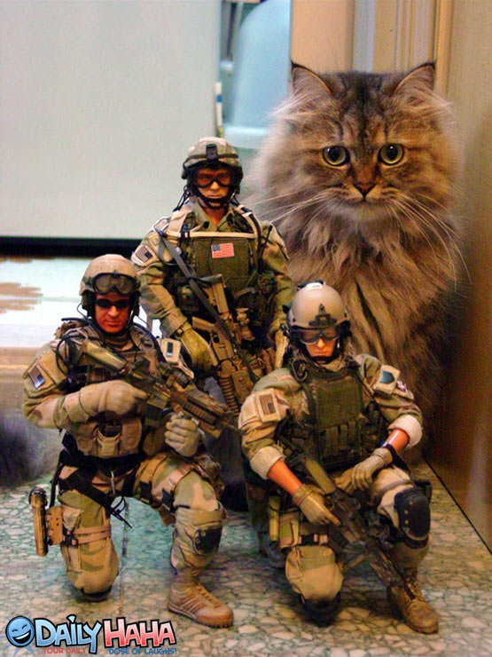 Army Cat