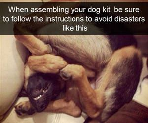 assembling your dog kit funny picture