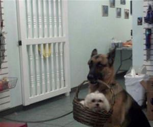 at the dog grooming spa funny picture