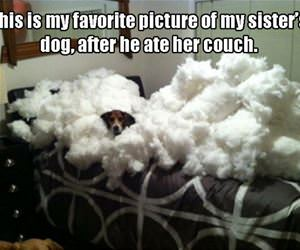 ate the couch funny picture
