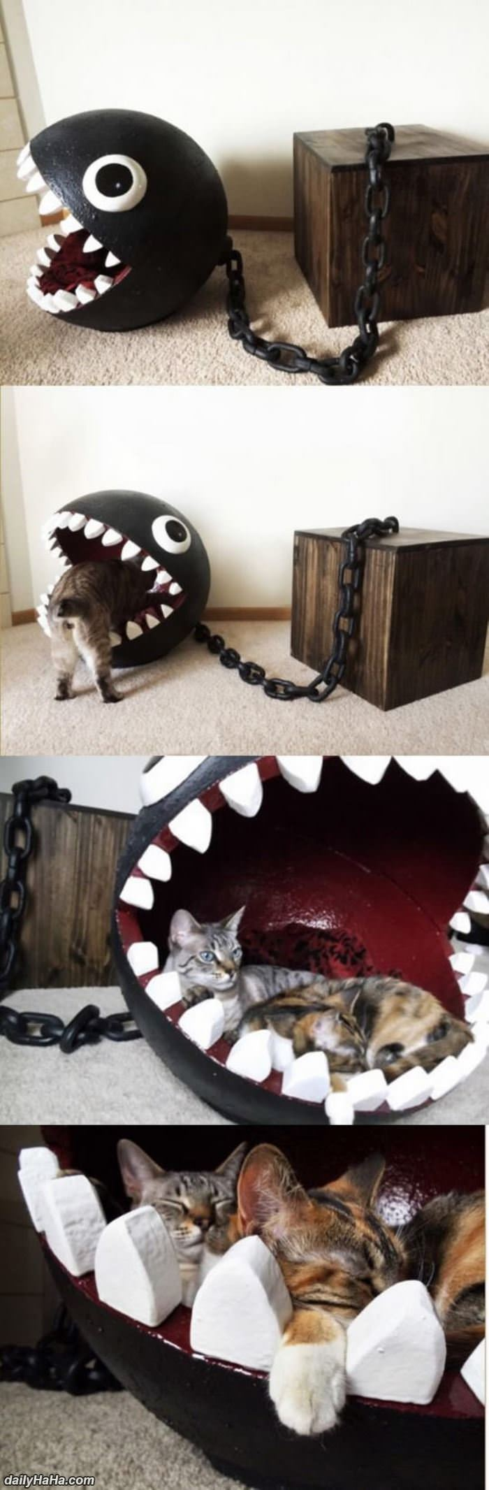 awesome cat bed funny picture