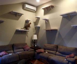 awesome cat wall funny picture