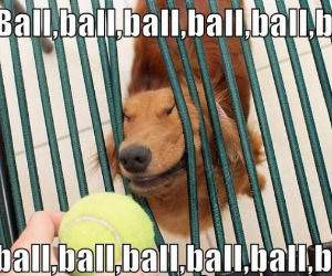 Ball Ball Ball funny picture