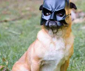 NaNaNa Bat Dog