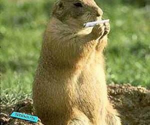 Beaver Weed