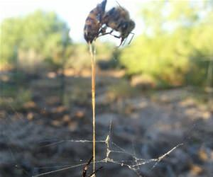 bee spider web death funny picture