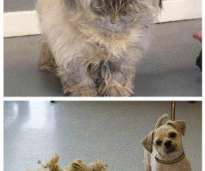 Before and After Furcut funny picture