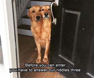 before you enter funny picture