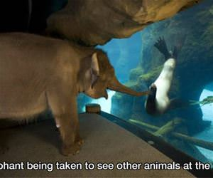 being taken to see other animals funny picture