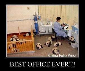 Best Work Office Ever funny picture