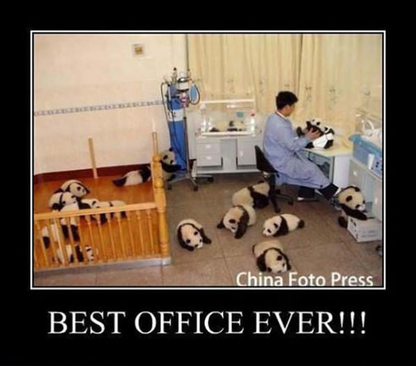Best office for Best office pictures