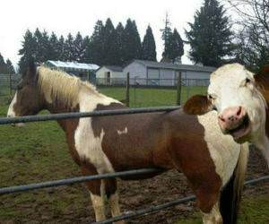 Expert Cow funny picture