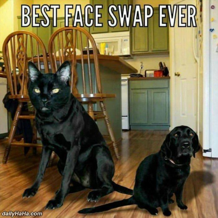 best face swap ever funny picture