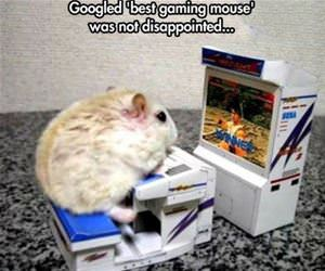 best gaming mouse funny picture