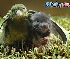 Bird Hugging Mouse
