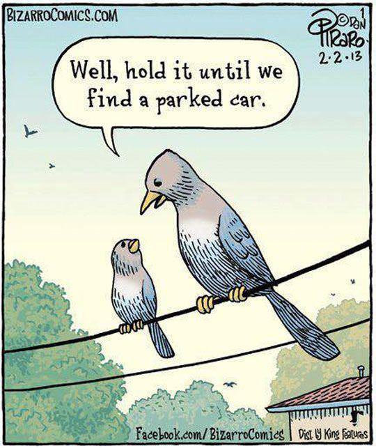 Bird Logic Bird_logic