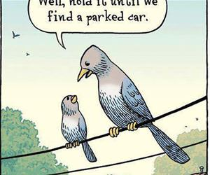 bird logic funny picture