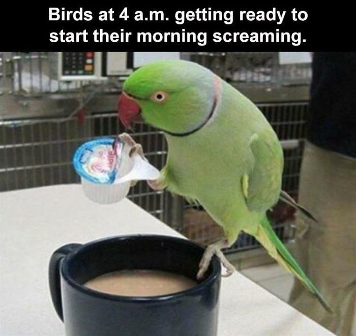 birds getting ready for the day