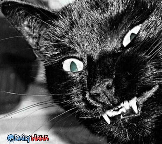 http://www.dailyhaha.com/_pics/black_cat_closeup.jpg