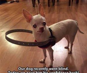 blind dog funny picture