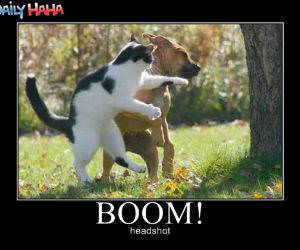 Boom, headshot Cat