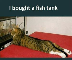 bought this new fish tank