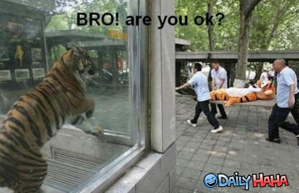 You Ok funny picture
