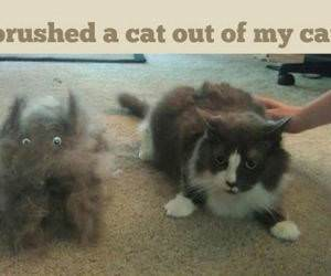 Brushed A Cat funny picture