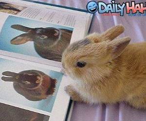 Bunny reading a book