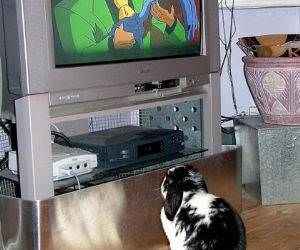 Bunny Watching TV