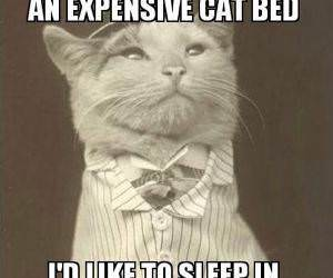 Buy Me A Cat Bed funny picture