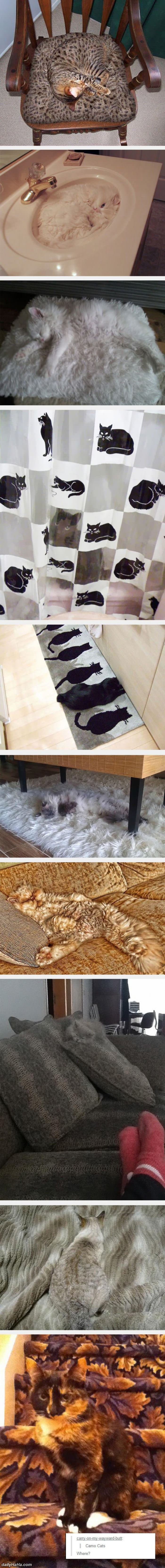 camo cats funny picture