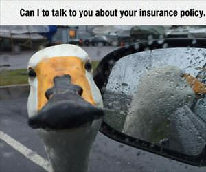 can i talk to you about your insurance