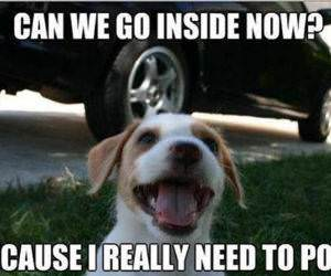 Can We Go Inside funny picture