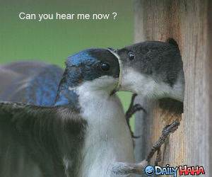 Hear Me Now funny picture