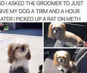 can i get a trim funny picture