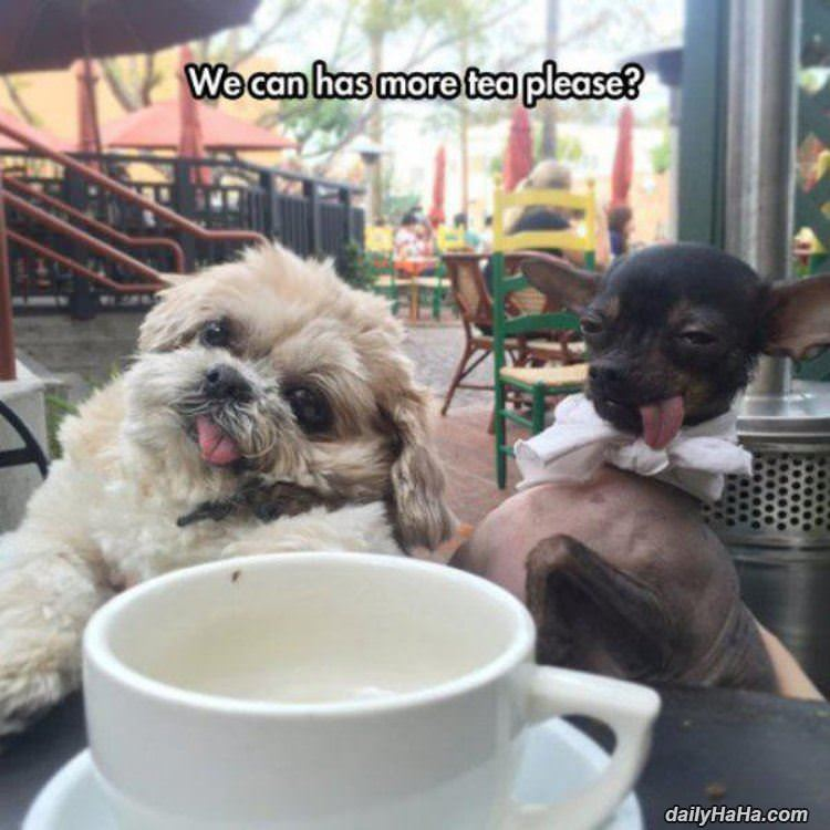 can we has some tea funny picture