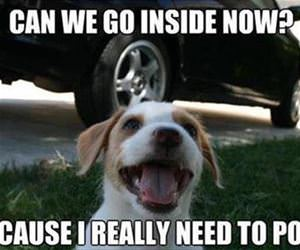 can we please go inside now funny picture